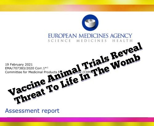 EMA Pfizer Documents Reveal Risks to Pregnancy in Animal Studies  Pfizer-animal-trials