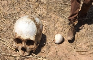Child-skull-Arizona-VOP-300x194